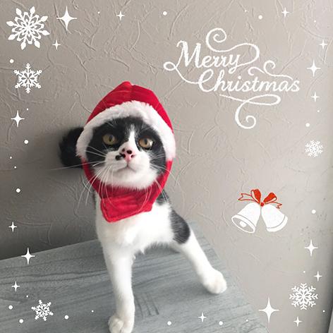 クリスマス2015_c0223478_0152446.jpg