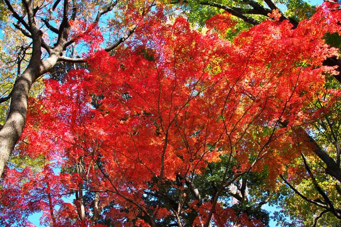 文京区 六義園の紅葉3_a0263109_150819.jpg