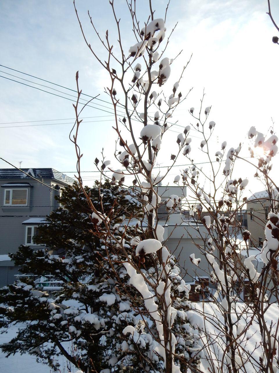 冬至から4日後の日の出_c0025115_22280724.jpg
