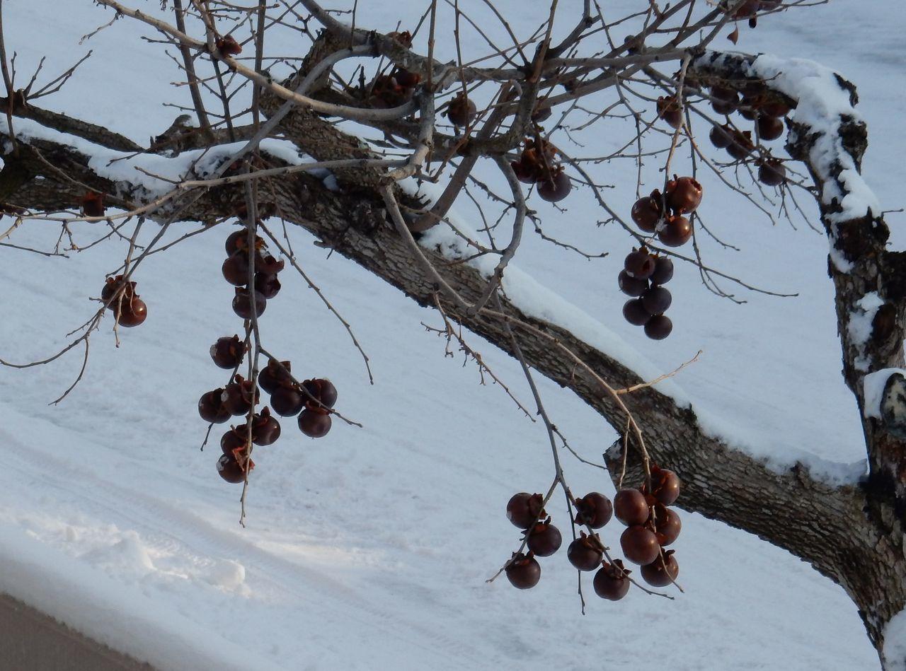 冬至から4日後の日の出_c0025115_22282803.jpg