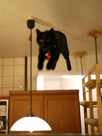 空飛ぶクリスマス猫 てぃぁらみるきぃ編。_a0143140_1947189.jpg