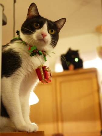 空飛ぶクリスマス猫 てぃぁらみるきぃ編。_a0143140_19475760.jpg