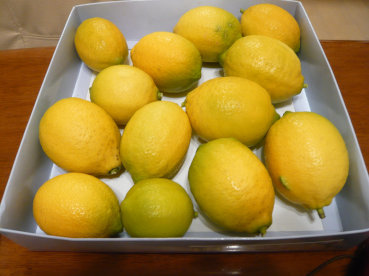レモン収穫_c0365341_22123707.jpg