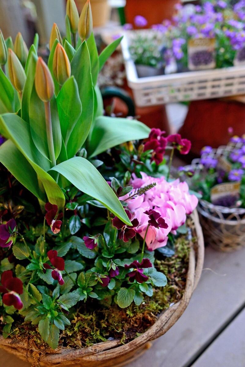 キラキラと輝く花達・・・・・_b0137969_05151190.jpg