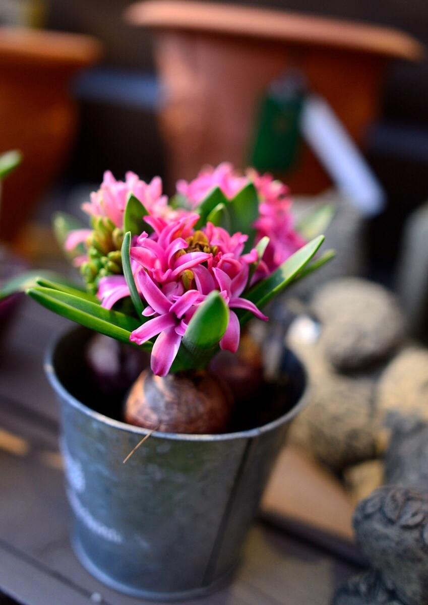 キラキラと輝く花達・・・・・_b0137969_05153975.jpg