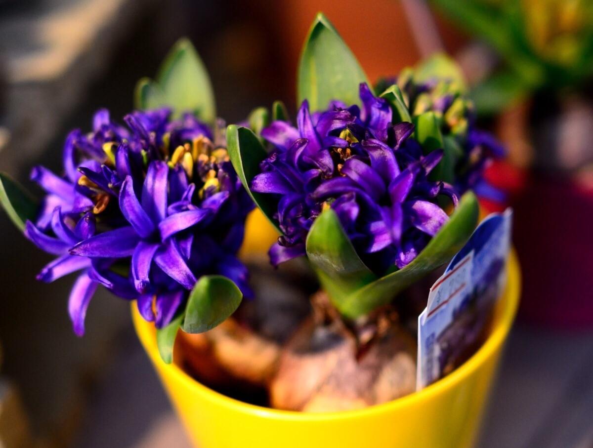 キラキラと輝く花達・・・・・_b0137969_05161133.jpg