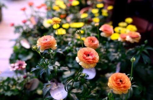 キラキラと輝く花達・・・・・_b0137969_05165105.jpg