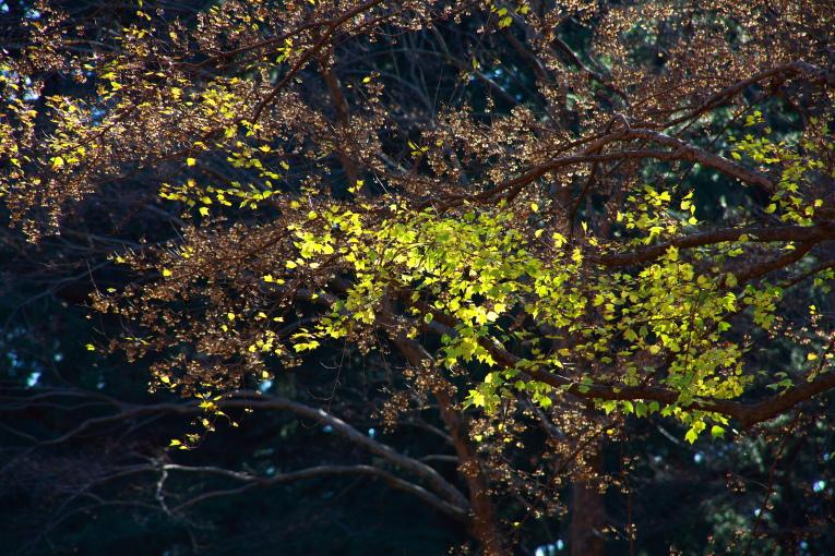 府中市 野川公園の冬景色_e0165983_133671.jpg