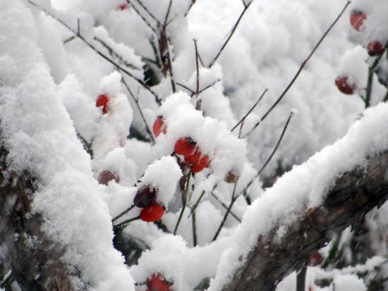 スズメの餌台、冬本番の雪景色♪_a0136293_16131531.jpg