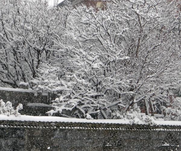 スズメの餌台、冬本番の雪景色♪_a0136293_16174243.jpg