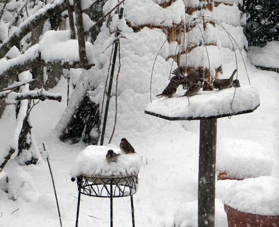 スズメの餌台、冬本番の雪景色♪_a0136293_1682892.jpg