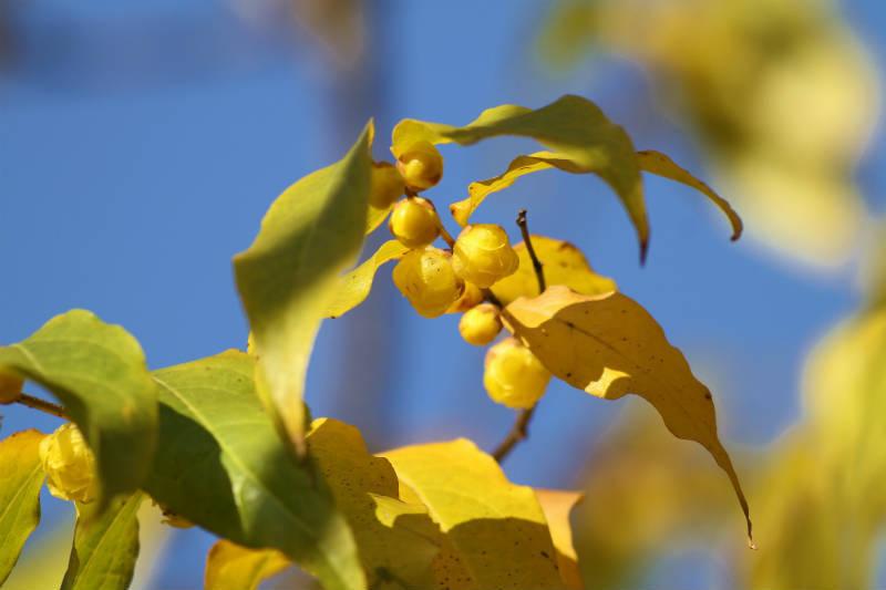 季節の花 12-2_b0223198_16095447.jpg