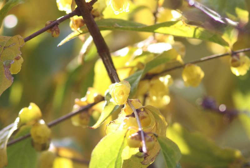 季節の花 12-2_b0223198_16115252.jpg
