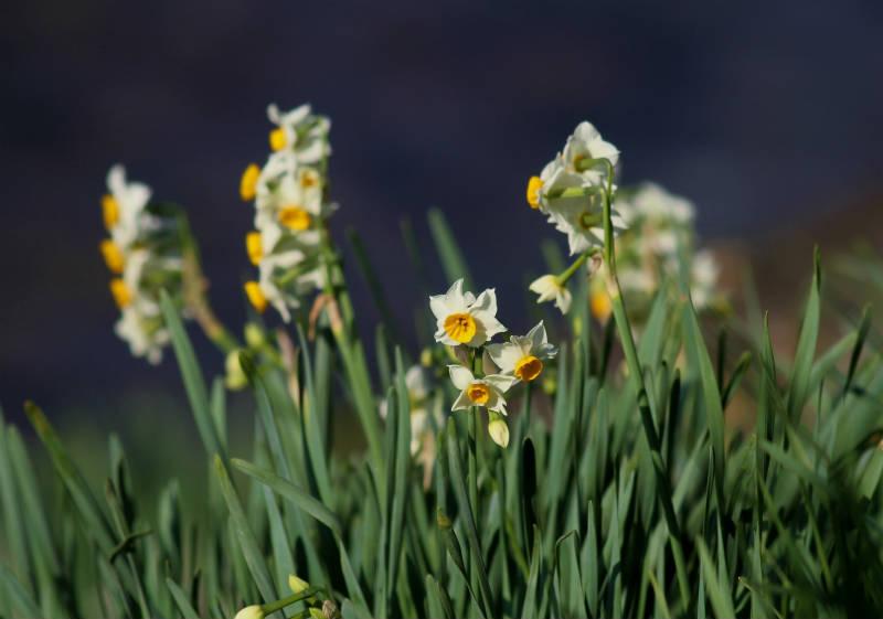 季節の花 12-2_b0223198_16152631.jpg