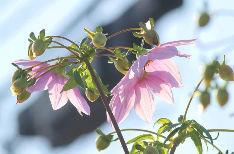 季節の花 12-2_b0223198_16170372.jpg