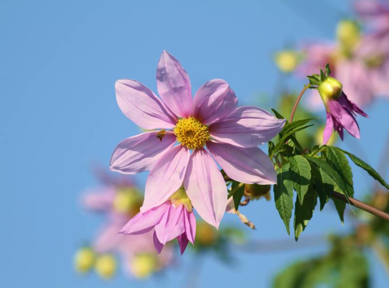 季節の花 12-2_b0223198_16172148.jpg