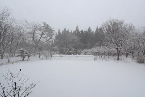 本日26日 今冬初めての積雪 3cm_e0054299_14395023.jpg