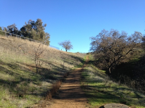 カリフォルニアポピーの種まき_a0331910_09301972.jpg