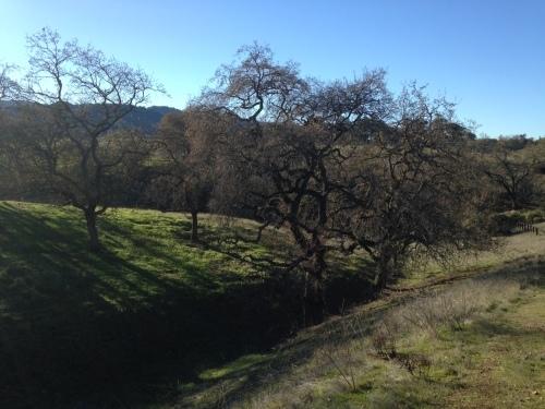 カリフォルニアポピーの種まき_a0331910_09411236.jpg
