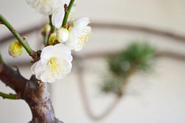 正月盆栽ワークショップ風景_d0263815_17252972.jpg
