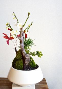 正月盆栽ワークショップ風景_d0263815_17291698.jpg