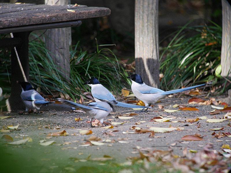 12/6 U公園にて_f0051915_17591663.jpg