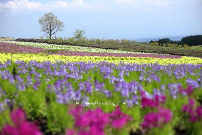 春が嬉しくて * 2015_e0347431_19505006.jpg
