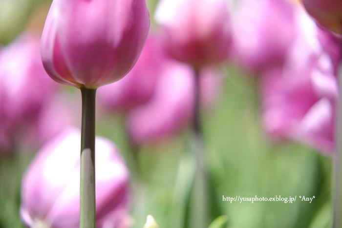 春が嬉しくて * 2015_e0347431_19505682.jpg