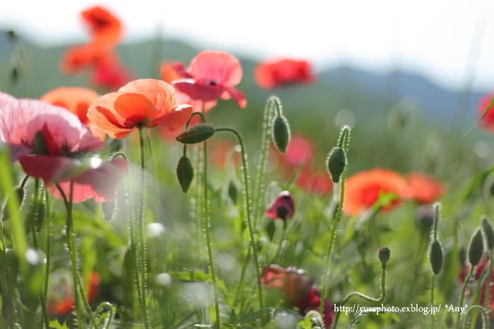 春が嬉しくて * 2015_e0347431_19510953.jpg