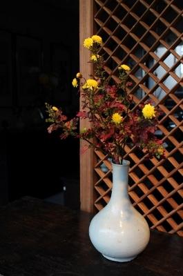花だより 寒菊_a0279848_10343478.jpg