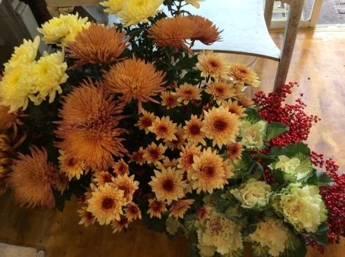 明日から、やっと、切り花・・・菊も葉牡丹もビューティフル_b0137969_19043149.jpg