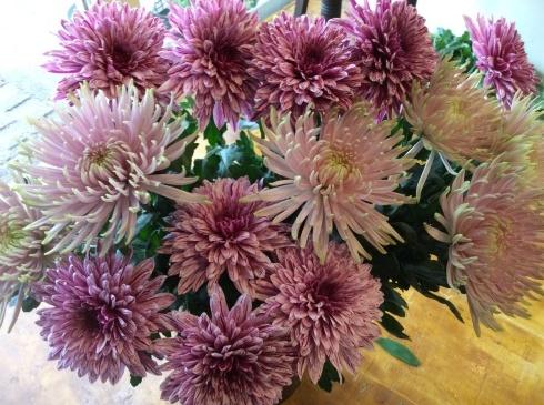 明日から、やっと、切り花・・・菊も葉牡丹もビューティフル_b0137969_19044906.jpg