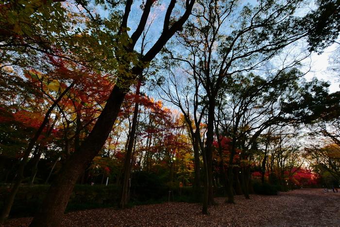 紅葉2015   糺の森                       _f0021869_0154172.jpg