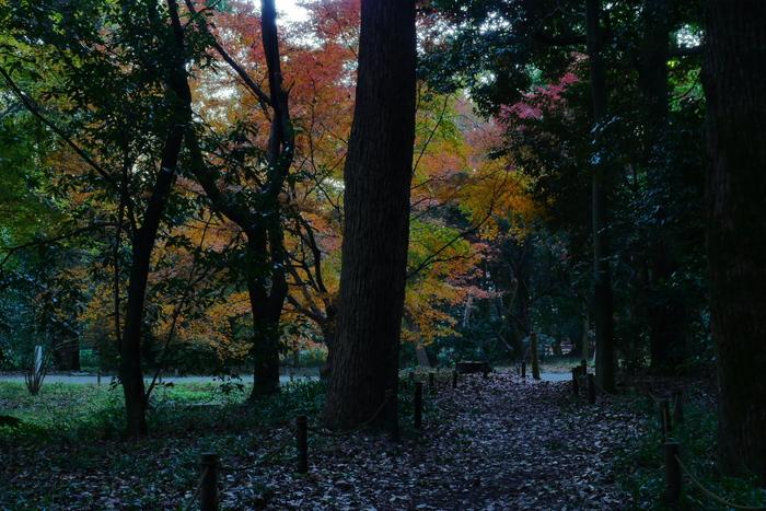 紅葉2015   糺の森                       _f0021869_0161522.jpg