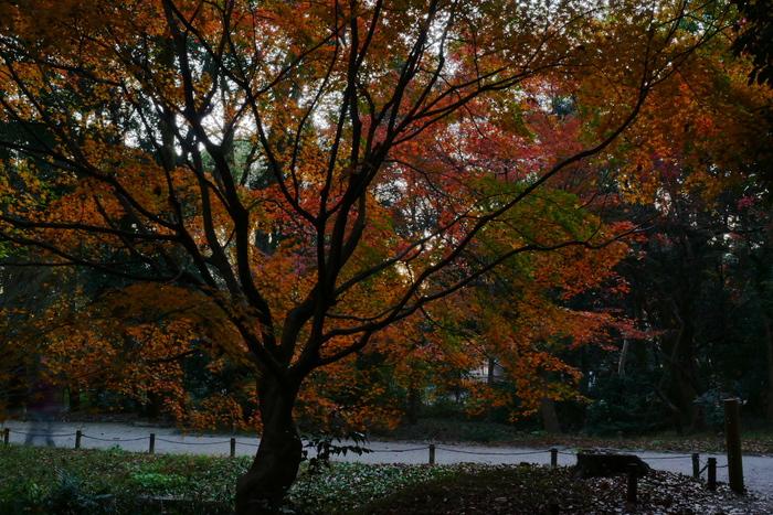 紅葉2015   糺の森                       _f0021869_0163276.jpg