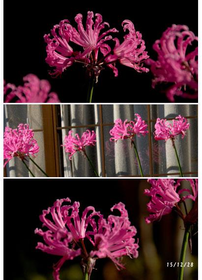 一年間有難うございました。庭の花、夫の検診_c0051105_17251878.jpg