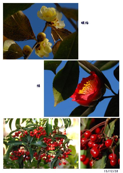 一年間有難うございました。庭の花、夫の検診_c0051105_1726181.jpg