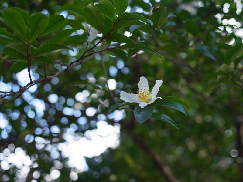 長沼公園_e0276411_1093052.jpg