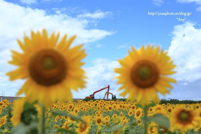 あの夏の日 * 2015_e0347431_17100443.jpg