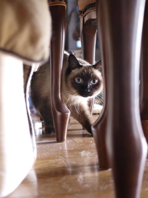 猫のお留守番 リュウくんジュンくん恋ちゃんトラキチくん編。_a0143140_17445565.jpg