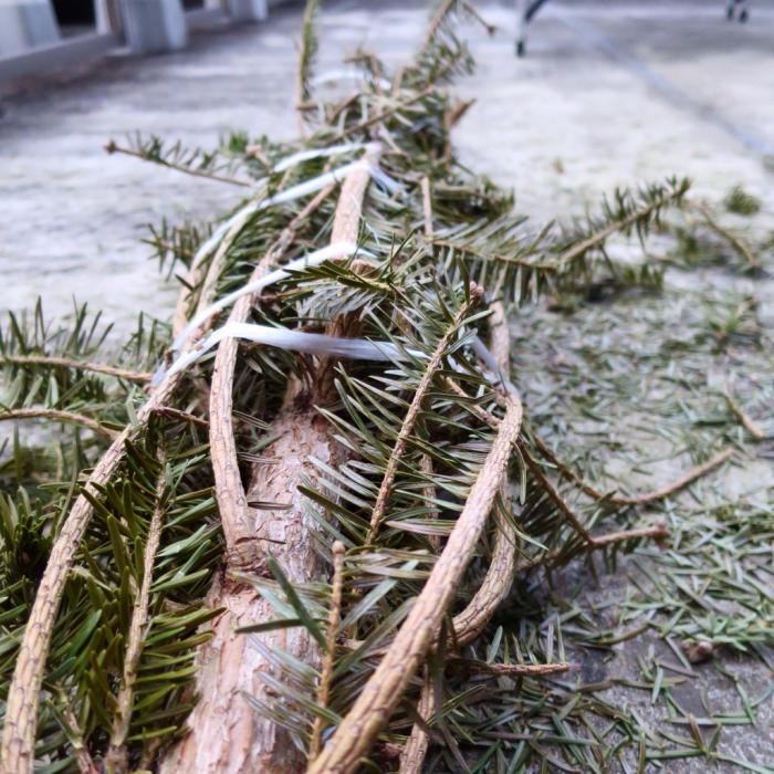 今年もありがとう、クリスマスツリー_c0060143_00373904.jpg