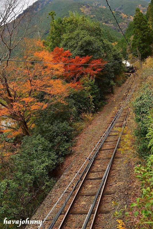 紅葉と豆粒~SL大井川鉄道~_c0173762_22131761.jpg