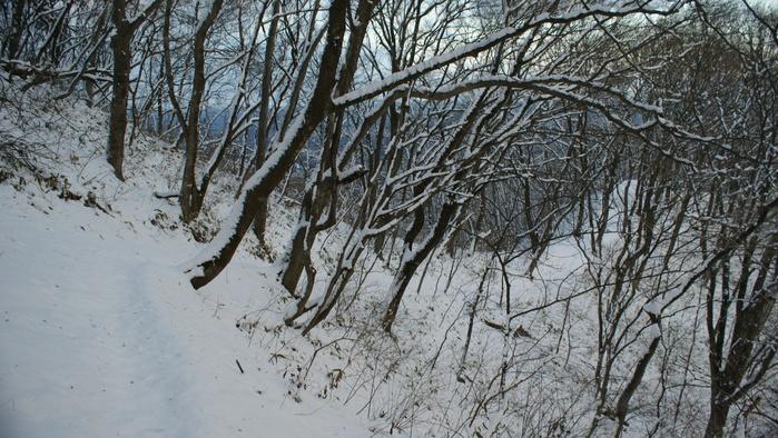 青麻山(31回目) ~ 2015年12月27日_f0170180_2040354.jpg