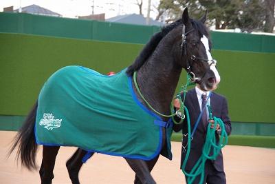 有馬記念は、ゴールドアクターが4連勝で人馬共に悲願のGI初制覇!_b0015386_0292344.jpg