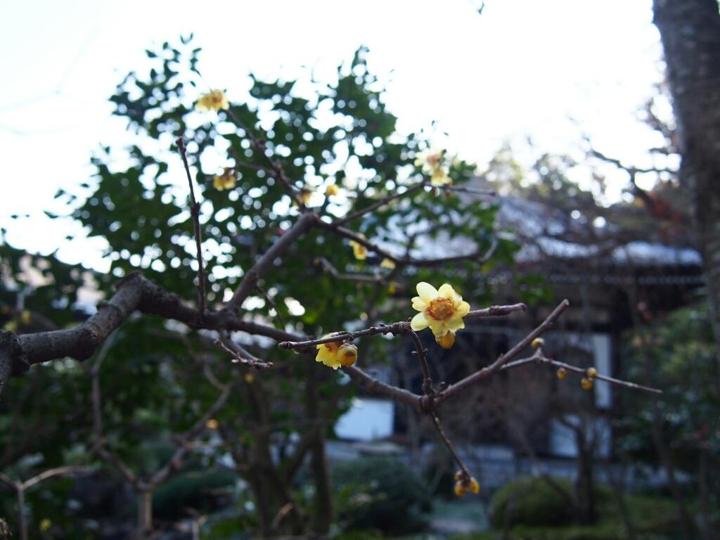 冬の鎌倉お花めぐり_e0139694_20333992.jpg