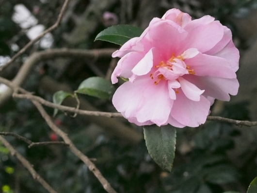 冬の鎌倉お花めぐり_e0139694_20334222.jpg