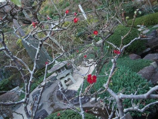 冬の鎌倉お花めぐり_e0139694_20334512.jpg