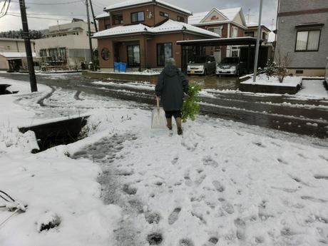 雪大根・ど根性タチアオイの花_a0203003_1133494.jpg