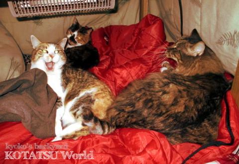 猫たちのコタツ・ワールド_b0253205_04133023.jpg