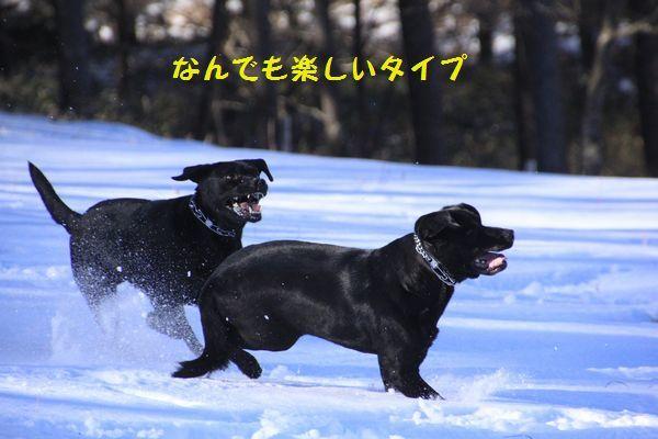 d0224111_09575377.jpg